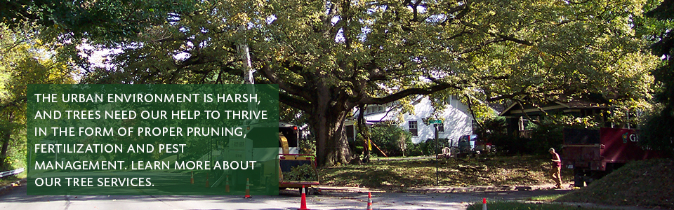 learn more about tree services and safe removal